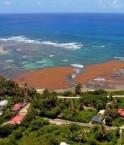 Invasion d'algues brunes en Guadeloupe. © Franck Mazéas (DEAL Guadeloupe)