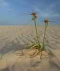 Où sont les éoliennes capverdiennes? © Staffan Wingren (Flickr.com)