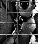 Chien en cage. © overgraeme (Flickr.com)