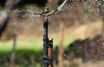 Arrosage contrôlé. © CIAT International Center for Tropical Agriculture