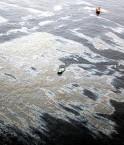 Marée noire au Brésil. © Agência Estado