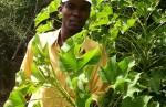 Jatropha en Haïti. © treesftf (Flickr.com)