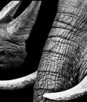 marche-pour-les-elephants-et-les-rhinoceros-green-et-vert