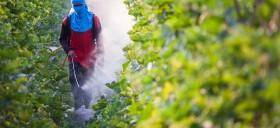 pesticide-agriculture-sante-cancer-risque-danger