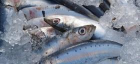 sardines-1106191_640