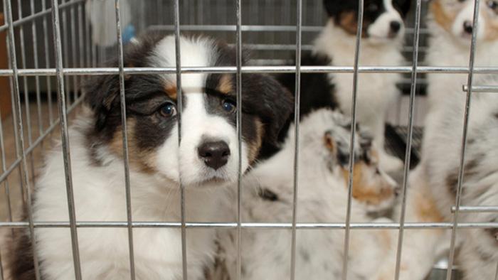 loi-interdiction-vente-chien-en-animalerie1